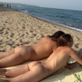 Asses on the beach